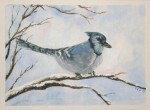 Acrylics on Paint Greeting Card Stock – Blue Jay
