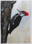 Acrylics on Paint Greeting Card Stock – PileatedWoodpecker