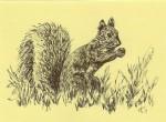 India Ink on Greeting Card Stock – GreySquirrel
